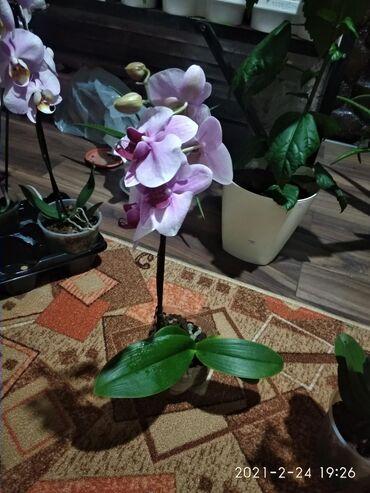 gtx 750 ti купить в Кыргызстан: Орхидея 750