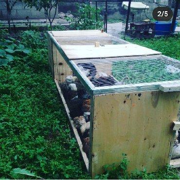 вольер для щенков в Кыргызстан: Тоок клетка, жожо кепе.Клетки для кур,цыплят,гусят, перепелок