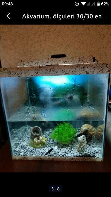 792 elan | AKVARIUMLAR: Akvarium tek 30 azn icinde her bir avadanligi ve 1 baliq skolyari.50