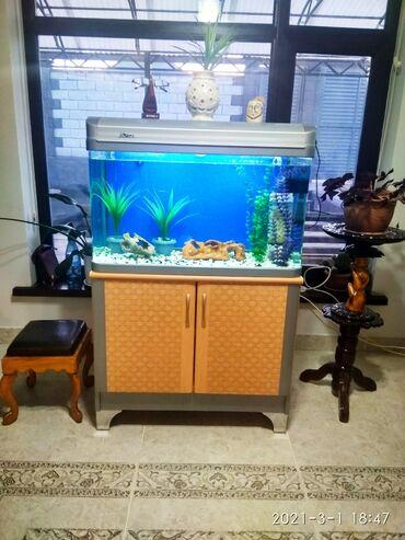 Аквариумы - Кыргызстан: Продаю заводской стильный аквариум с тумбой 150 литров, в отличном
