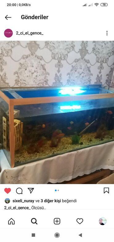 4 elan   HEYVANLAR: Su qızdırıcısı, termometr, işıq, stolu, suni ot 20- ədət balıqlar