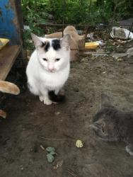 Mačke | Srbija: Udomljavaju se macici i maceOsim mladjih maca (njih vidite na slikama)