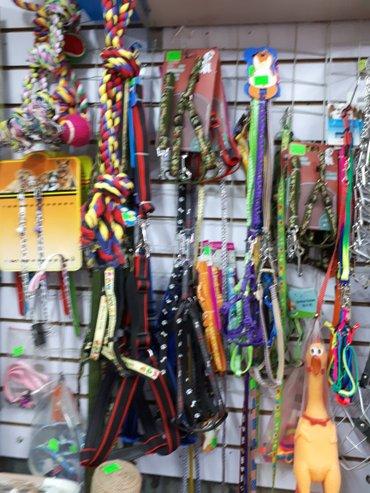 продаются поводочки.шлеечки для декоративных собак в Бишкек