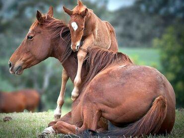 Услуги ветеринара - Кыргызстан: Услуги Ветеринара Услуги Вет-врача Опытный ветеринар Все виды С/Х