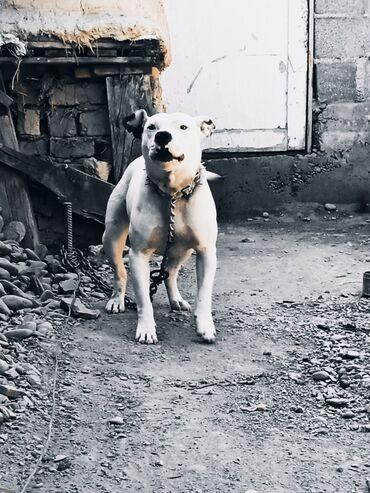 Животные - Бактуу-Долоноту: Собаки