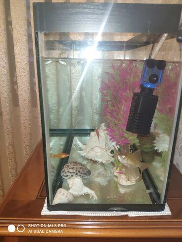 792 elan | AKVARIUMLAR: Akvarium balıqlar qarışıq satılır hər növ balıqlar var.icinin bəzək