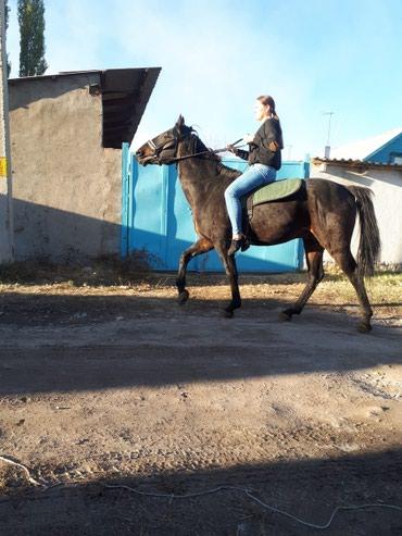 Лошади из России в Кант - фото 4