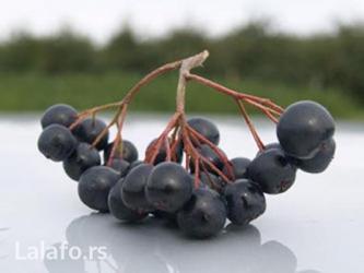 Plod aronije je prava riznica vitamina i minerala. U bobici aronije - Belgrade