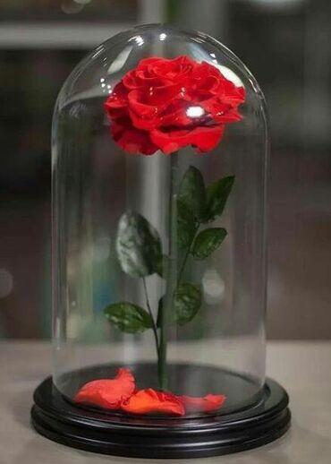 Живые розы в стеклянной колбе. 32см-3000сом. 16,5см-1600сом