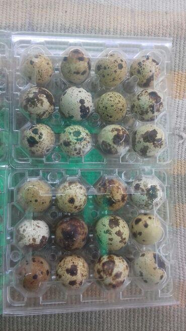 Животные - Маевка: Продаю перепеленые яйца домашние 12шт 60сом