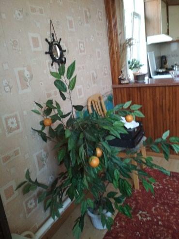 Мандарин искусственный цветок в хорошем состоянии цена 1500 в Бишкек