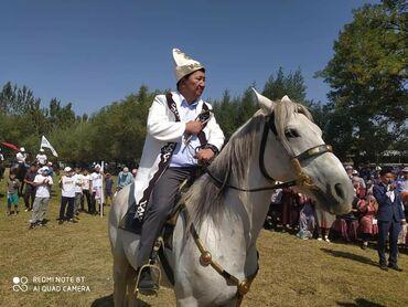 Животные - Кыргызстан: Ээр токум сатылат буйрутма менен дагы жазайбыз жугон комолдурук