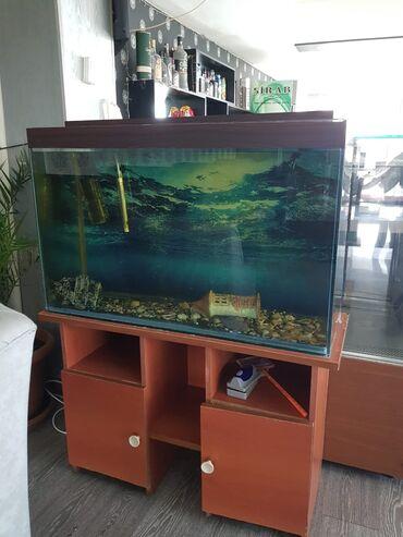 Ucuz telfon - Azərbaycan: 2 eded akvarim altligi ile birlikde 400 azn deyerinden 3 defe ucuz