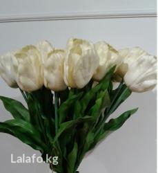 Тюльпан – солнечный цветок. цветки в Бишкек