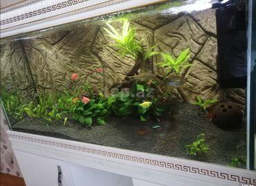 Salam akvarium versage alt skafiyla birlikde u100 e40 h50