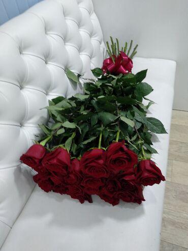 Голландские розы от 100с
