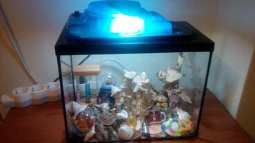 Ενυδρείο διακοσμητικό που μπορεί να χρησιμοποιηθεί κ για ψάρια με