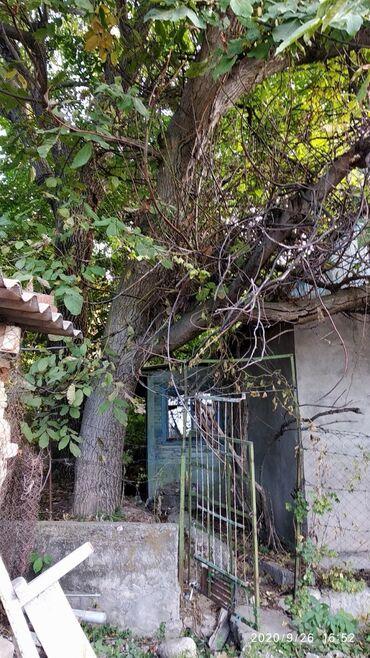 95 объявлений: Продаю два дерева ореха, самовывоз. цена договорная, деревья большие