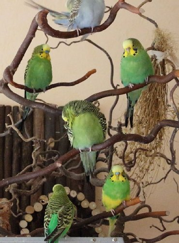 Попугаи 🦜 разных цветов