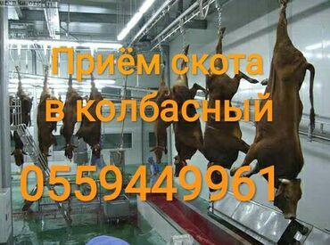 В колбасный цех принимаем коров быков лошадей и телок любой