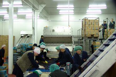 Potrebni Musko Zenski radnici za rad u Hladnjaci  Radi se Nemacku Komp