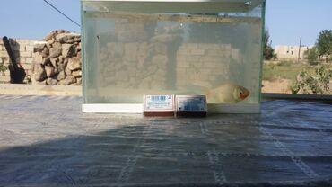 792 elan | AKVARIUMLAR: Akvariumlar