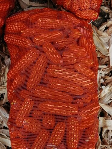 разбит экран телевизора ремонт цена в Кыргызстан: Кормовая кукуруза Маями сорт. Сухая. Упакованная в мешках. Хранится по