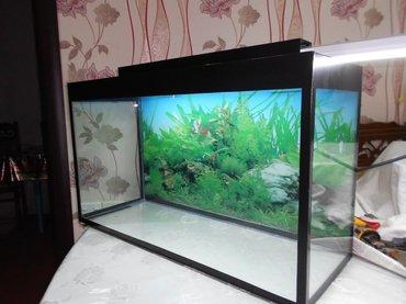 Bakı şəhərində Teze 70 litrelik akvarium wuwenin qalinliqi 6mml
