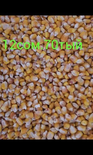 прадаю кукуруза оптом 25тонна в Бишкек