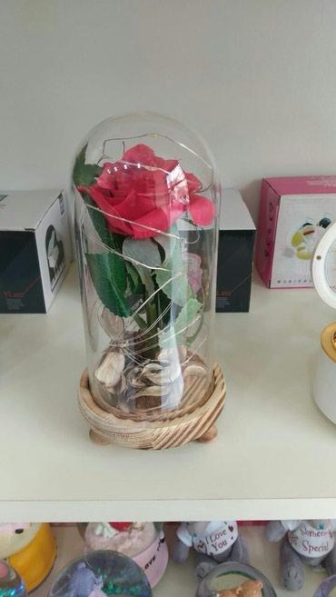 led фары в Азербайджан: Led Rose