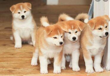Животные - Кербен: Мне нужен один щенок, мальчик