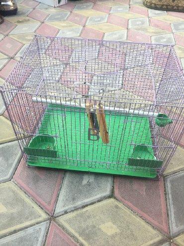 домик на колёсах в Кыргызстан: Продам домик для попугаев 1 домик 1000 сомов  Второй домик стоит 500 с