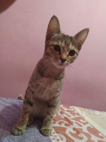 jubka na vysokoj posadke в Кыргызстан: Отдам даром очень ласковую девочку 3-х месяцев в добрые руки. К лотку