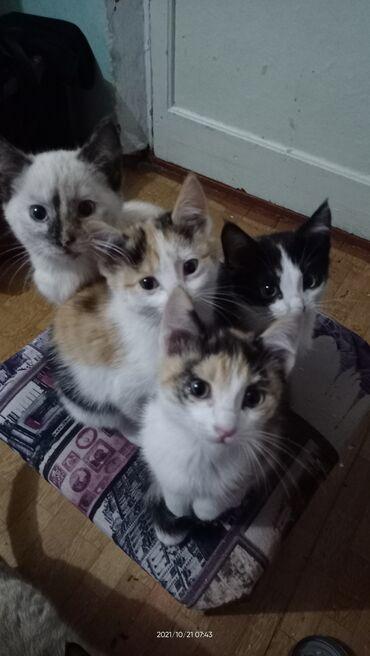 26 объявлений | НАХОДКИ, ОТДАМ ДАРОМ: Отдадим в добрые руки четыре котенка