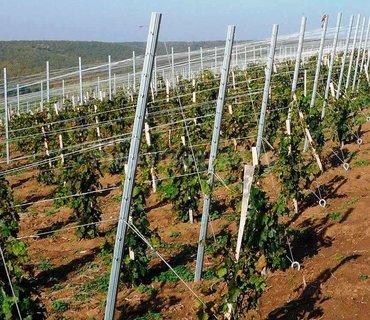 Шпалеры виноградные Такие шпалера идеально подойдут для молодого виног