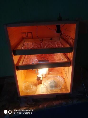 Инкубатор сатылат . Баасы 3000 сом . 100 жумурткалык