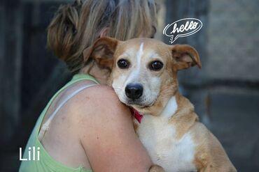 Pas - Srbija: Udomljava se Lili (Kasjina sestra) Lili i Kasja zajedno su došle u Dob