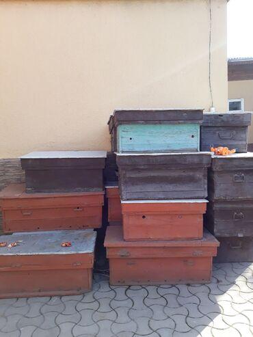 дамас ош сена in Кыргызстан   УНАА ТЕТИКТЕРИ: 15 16 штук ары ящиктери сатылат Продаются ульи для пчёл 15 16 шт улей