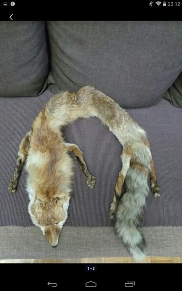 Personalni proizvodi | Obrenovac: Prirodno krzno lisice,nosi se kao okovratnik.Naustima je štipaljka