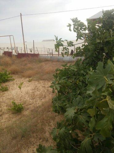 Bakı şəhərində kurdaxanida lehic bağlarinda 12 sot torpaq satilir uzumu ve əncil ağac- şəkil 4