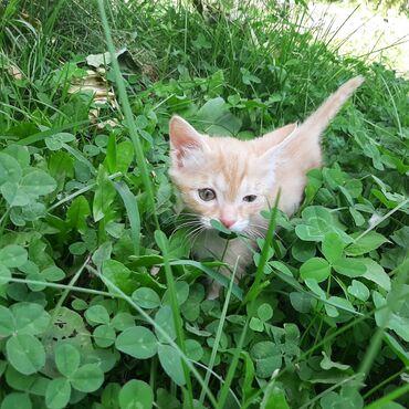 2694 объявлений: Отдам котёнка Выкармливала его сама, мама кошка бросила котёнка. Один