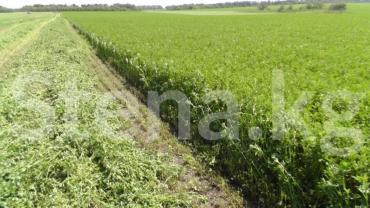 Продам 3700 соток Для сельского хозяйства от собственника