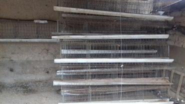 Клетки для несушек  (курицы ) 16 штук бар в Джалал-Абад