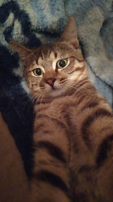 В добрые руки пристраивается кот! 5-6, месяцев,привит,обработан от