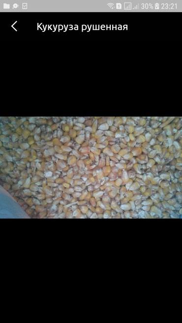 Кукуруза  рушенная оптом 50 тонн  в Бишкек