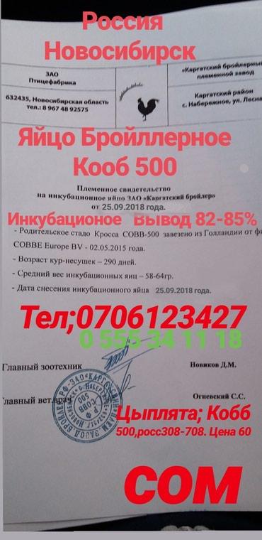 Яйцо кобб 500. росс 308-708 россия! фермы и в Кок-Ой