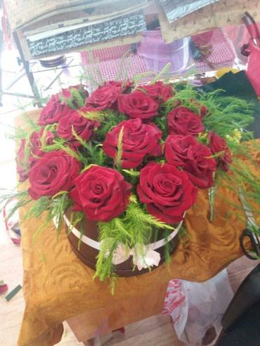 Цветы, игрушки, открытки, комнатные растения в Бишкек