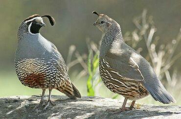 Животные - Кочкор-Ата: Птицы