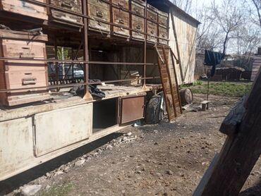 ���������� ������������������ �������� �� �������������� в Кыргызстан: Продаю повелион все вопросы по телефону цена 3500