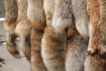 225 объявлений: Продаю 6 шкур лисицы зимние, выделанные, сувенирные. Так же есть две ш